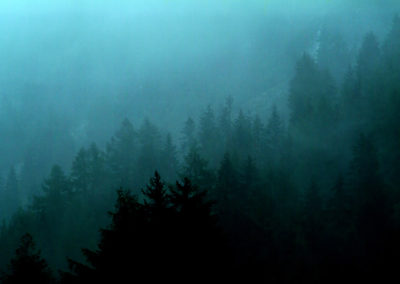FOREST IN DAWN